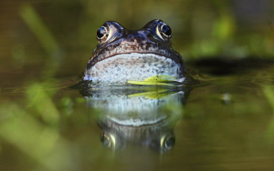 Ribbit – the Coolest App in the Pond