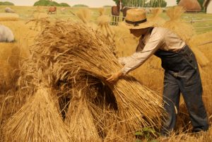 """Separating the Search """"Expert"""" Wheat from the Chaff"""