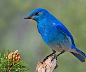 The Blue-State Bird of Tweetiness