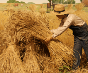 "Separating the Search ""Expert"" Wheat from the Chaff"